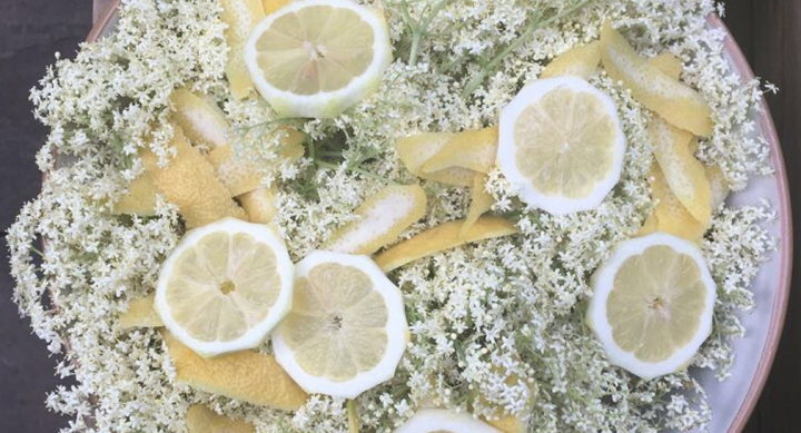How to Make Elderflower Cordial – Foraging in the City